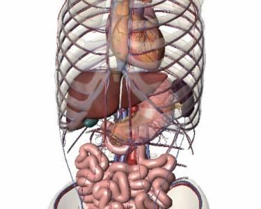老中醫延年益壽的妙方!身體各個器官的排毒時間與方法,再不保養就遲了!為家中長輩珍藏吧!