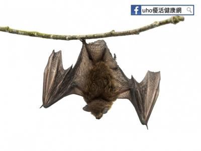 若遇蝙蝠抓咬傷怎麼辦?!可以這樣做...