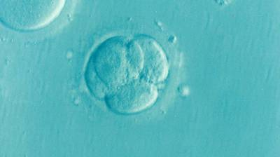 冷凍胚胎是誰的