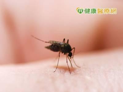 拒當人體捕蚊燈 蚊子別緊迫「叮」人