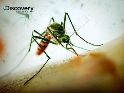 蚊子傳染病猖獗 一年死75萬人
