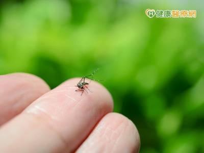 加強防蚊! 今年首例本土登革熱在高雄