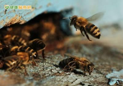 山區防蜂螫 保命有3招
