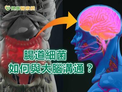 腸道細菌 如何與大腦溝通?