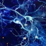 大腦模式與身體的壓力反應