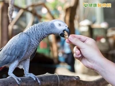 餵養鳥類要當心 糞便易隱藏隱球菌