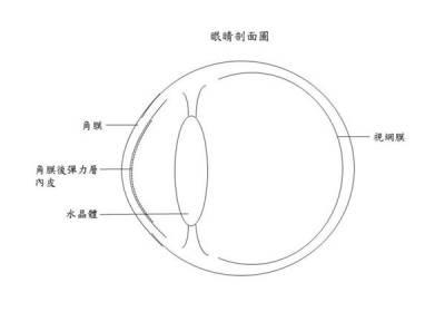 角膜移植術大突破!缺陷角膜再利用,助改善視力