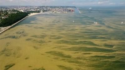 波蘭海域有毒藻類暴增 關閉數十處沙灘