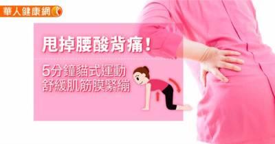 甩掉腰酸背痛!5分鐘貓式運動,舒緩肌筋膜緊繃