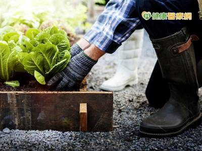 白色巨塔中綠色療癒 園藝治療好舒壓