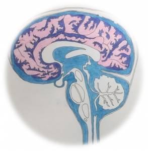 只要「一夜好眠」就能抗發炎 防感冒?!一秒揭開「睡覺時,腦部的排毒運作」...