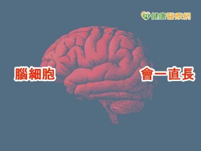 人老了腦不一定殘 研究:腦細胞會新生
