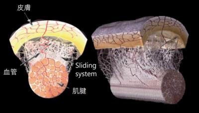 沒看過這5張圖,別說你了解筋膜|阿舟物理治療