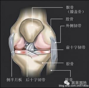 你膝蓋痛嗎?膝蓋骨痛有救了!腰腿疼痛的人一定要看!果斷收藏!(歡迎分享)
