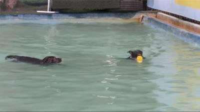 怪比賽回顧/狗狗也有奧運!各路高手比跳水