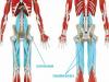 5步驟!瘦腿之單腳深蹲運動...對腿部水腫也有效!