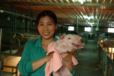 萊豬大解密|擔心萊豬有疑慮?這幾間台灣優質好豬肉讓你呷免驚