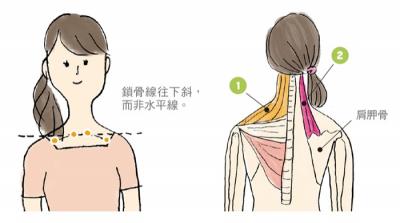 「肩膀痠痛」好惱人!教你分辨「肌肉疲勞」,非「肩關節疼痛」...