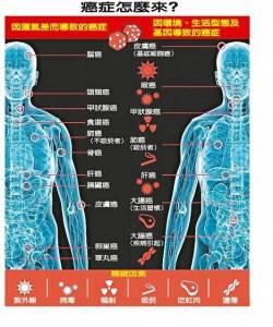 美研究最新發現:罹癌皆因「運氣差」