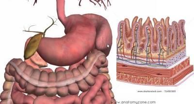 清潔胃壁 大小腸 疏通血脈全靠這杯水!我確實做了一週,從頭到腳都變完美了!真的很簡單!