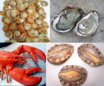 常見的幾種美味海鮮的正確吃法!跟著做健康能量多出200 !