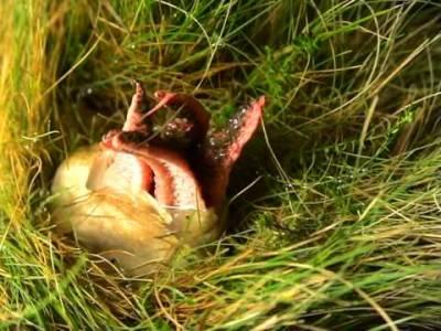 草叢中一個卵囊藏著鮮紅色的「外星生物」讓大家都很害怕,最後孵化的過程讓大家都嚇哭了!